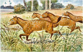 Description: https://upload.wikimedia.org/wikipedia/commons/8/84/Mesohippus.jpg