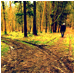 Two Roads in the Wood thumbnail